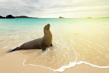 A Seal On The Seashore, A Sea Lion On The Seashore.