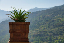 Pot With An Aloe Plant In A Viewpoint Overlooking The Mountains In Güéjar-Sierra (Spain)