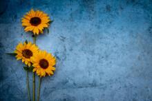 Fleurs De Tournesol