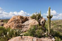 Saguaro NP 03