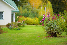 Beautiful Green Garden Full Ot Trees, Decorative Plants And Blossoming Flowers With Big White House In A Background.