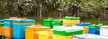 Background Of Hives Against Green Grass. Beehives With Honey Bees. Bees Come Back From Honey Collection And Fly Into Beehive's Entrance Banner
