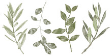 Autumn Collection Green Eucalyptus Leaves
