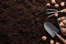 Planting Tulip Bulbs In Soil With Garden Tools