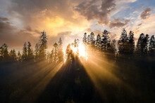 Aerial View Of Dark Green Pine Trees In Spruce Forest With Sunrise Rays Shining Through Branches In Foggy Autumn Mountains.