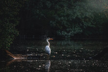 Stork At The Lake In The Sunset