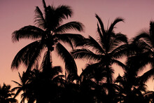 Palm Trees Silhouettes Background
