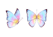 Watercolor Botanical Summer Set Of Multicolor Colorful Butterflies