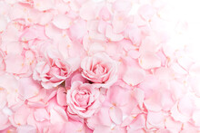 Background Of Delicate Pink Rose Petals And Buds Closeup