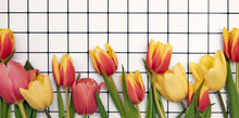 Floral Background With Copy Space. Flat-lay Frame Of Tulips. Womens Day, Mothers Day Greeting Card