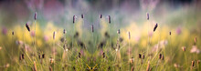 Grass And Wild Flowers In The Autumn Meadow. Banner .Tranquil Autumn Fall Nature Field Background. Soft Golden Hour Sunlight At Countryside. Close-up. Picturesque Colorful Art Image With Soft Focus
