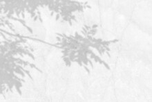 Shadow Of Leaves And Branch On White Marble Wall Background. Abstract Black White Leaf Shadows