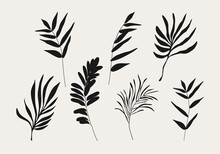 Minimalist Botanical Branch With Leaves Elements For Abstract Collage