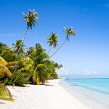 Tropical Beach With Palm Trees And Turquoise Sea