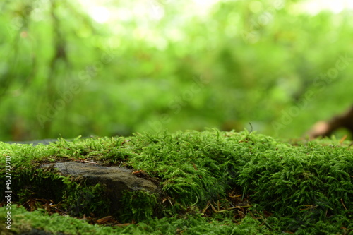 Obraz na plátně Moss on stones, green forest background, green moss, natural background, bokeh empty space, space for text