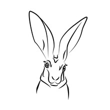 Vecctor White Blck Hare Head With Big Ears Realistic Rabbit Contour Illustration Wild Animal Logo Rodent Silhouette