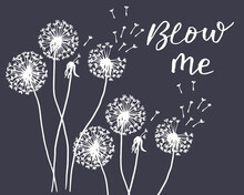 Vector Illustration, Drawn Contour Dandelions And Lettering, Design For Wallpaper, Textiles, T-shirts, Cards