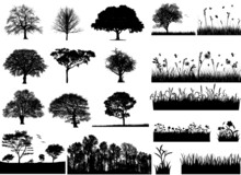 Trees And Grasses