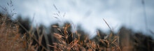 Dried Grass Waving In The Wind. Fragile Leaves And Stems Of Thin Wild Plants On Blurred Forest Background.