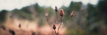 Dried Wild Plant Stems And Seed Pods On Blurred Green And Brown Forest In The Mountain