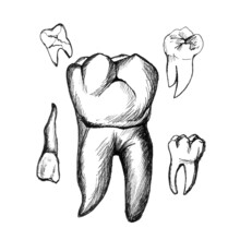 Graphic Drawing Of Teeth On A White Background Of Black Lines.