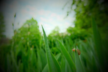 Small Snail In The Big Grass