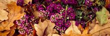 Alyssum Purple Flowers In Full Bloom Among The Fallen Orange Autumn Oak Leaves In The Fall Park. Banner