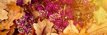 Alyssum Purple Flowers In Full Bloom Among The Fallen Orange Autumn Oak Leaves In The Fall Park. Banner. Flare