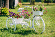 Decorative Retro Vintage Model Bicycle Equipped Basket Flowers Garden In Sunny Summer Day. Summer Flower Bed With Petunias. Landscaping, Garden Decor