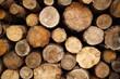 Pieńki drewniane ścięte tło