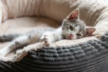 Cute Kitten Lying In A Cat Bed