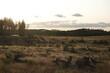 Krajobraz kaszubski kilka lat po trąbach powietrznych: Lipusz