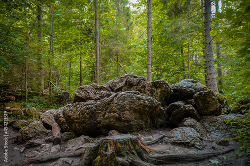 boulders in the forest