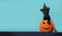 Happy Halloween Background. Black Little Funny  Kitten Sitting In Halloween Jack-O-Latern