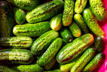 Green Fresh Crispy Cucumbers Are Filled With Cold Water In A Basin For Further Salting