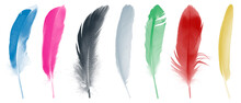 Colorful Collection Feathers  Isolated On White Background