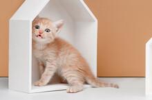 Homeless Ginger Kitten Studio Shooting On A Beige Background