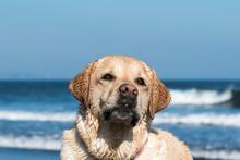 Retrato De Un Perro En La Playa