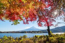 Japanese Maple Tree And Mount Fuji At Lake Kawaguchiko During Autumn Season, Yamanashi Prefecture, Japan