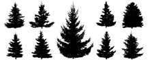Silhouette Of Spruce Trees, Set. Beautiful Fir Tree For Creating Forest. Vector Illustration