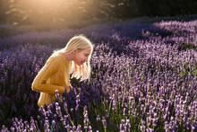Blonde Girl Looking At Bees In Lavender Field