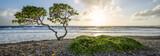 Fototapeta Nowy Jork - Lonely tree at the beach at sunset