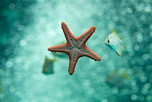 Shallow Focus Of A Red Sea Star Under Blue Shiny Water Beside A Fish With Blurred Light Water