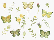 Watercolor Set With Butterflies And Greenery. Hand Drawn Summer Design Elements For Greeting Cards, Invitations, Poster Prints, Logo And Other.