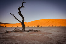 Dead Acacia Trees And Red Dunes In Deadvlei. Sossusvlei. Namib-Naukluft National Park, Namibia