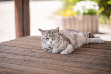 ウッドデッキで安らぐ猫 ねこ くつろぐ猫 リラックスする猫