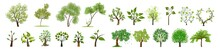 Green Grass Isolated On White. Vector Tree Set. Set Of Trees. Set Of Trees On White. Watercolor Illustration.
