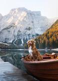 Fototapeta Kawa jest smaczna -  dog Nova Scotia Duck Tolling Retriever in boat. Mountain Lake Braies. boat station. Morning landscape with a pet