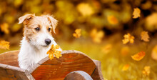 Cute Pet Dog Puppy Listening With Golden Leaves, Autumn Banner