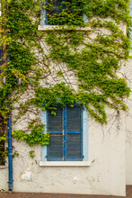 Blue Colored Wooden Shuttered Windows On The Wall Of A Building Covered By A Nice Creeper